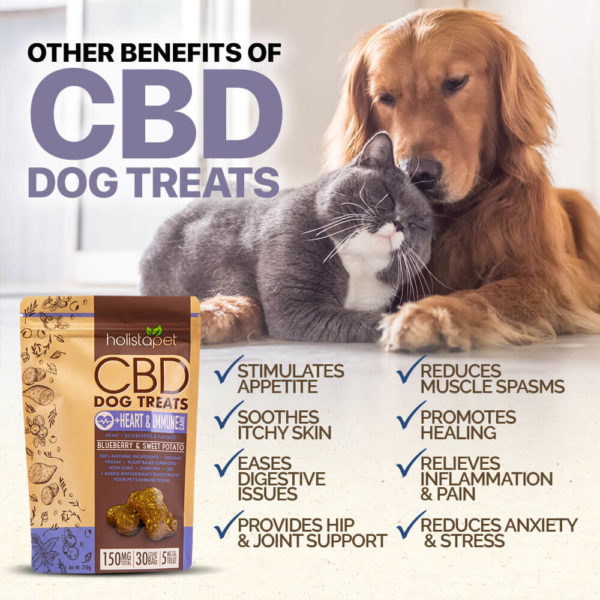 cbd holistapet other benefits for dogs helps your pet treats and benefits