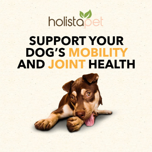 holistapet dog treats cbd hemp extract support your dog's mobility and joint health