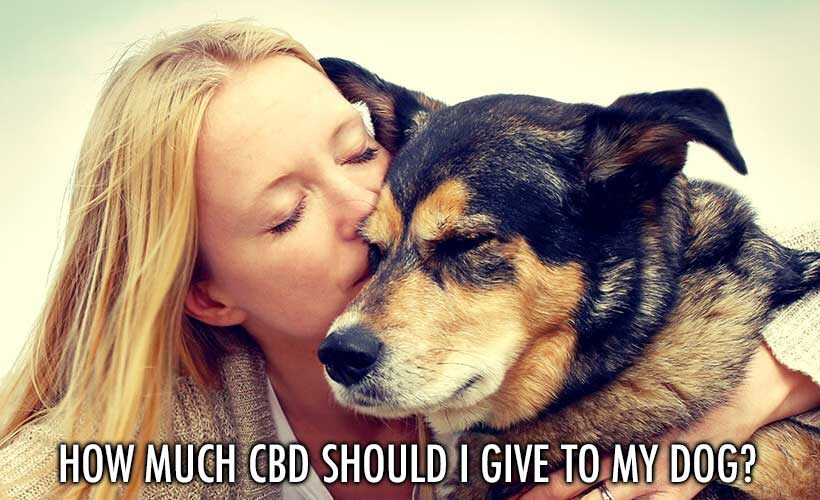 How Much Cbd Should I Give My Dog