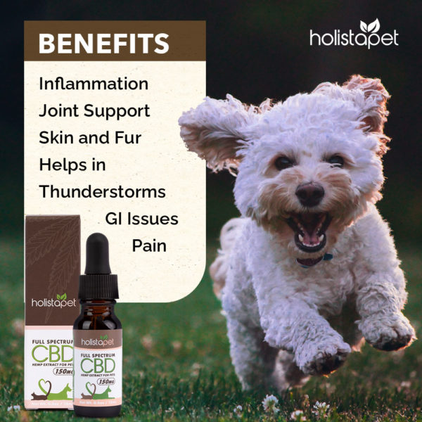 Benefits on CBD full spectrum hemp extract for pets inflammation Joint Support Skin and Fur Helps in Thunderstorms GI Issues Pain