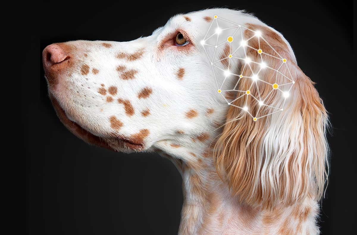 Its Not Just About Health Care >> Using CBD Oil For Dog Seizures - What You Should Know | HolistaPet