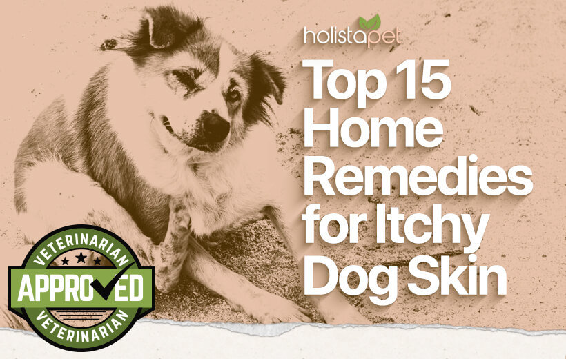 The Best Dog Itchy Skin Home Remedy Full List Cbd For Dog Itch