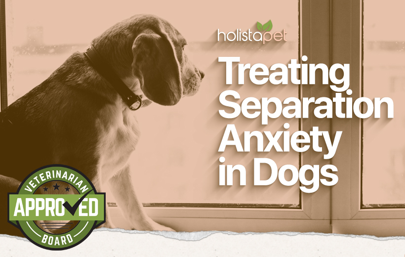 help a dog with separation anxiety