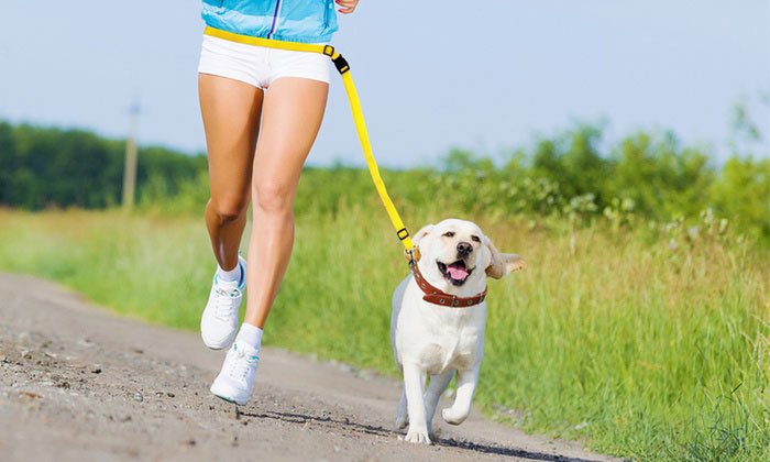 exercise for nervous dog running