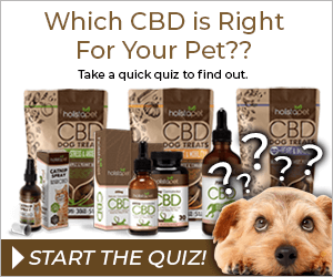 holistapet cbd quiz