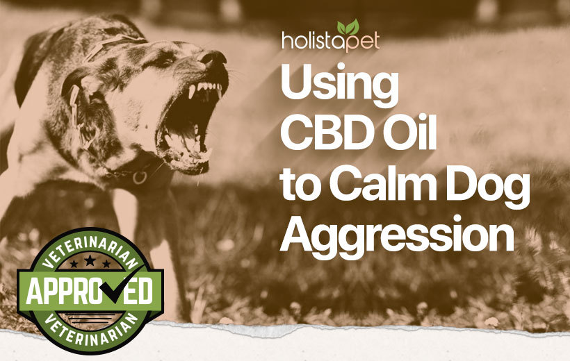 cbd oil for dog aggression featured blog image