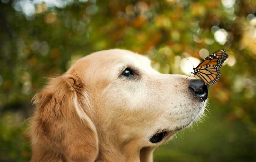 12 Benefits Of Benefits Of CBD Oil For Dogs