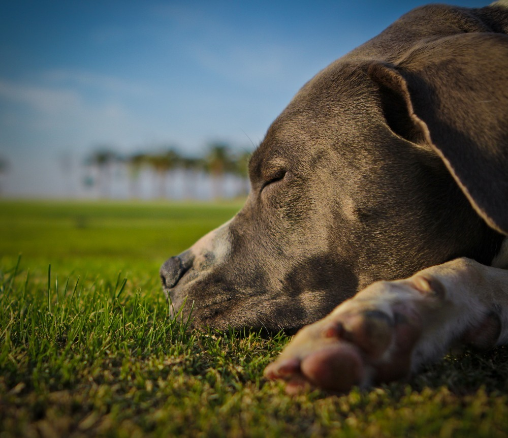 Mast Cell Tumors Dogs Natural Remedies