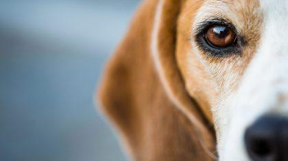 CBD & Dog Skin Cancer - Everything You Need To Know | HolistaPet