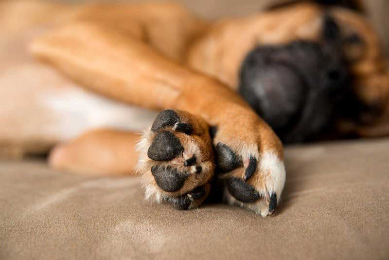Dog's Itchy Paws