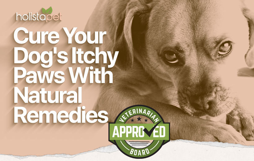 cure dog's itchy paws featured blog image