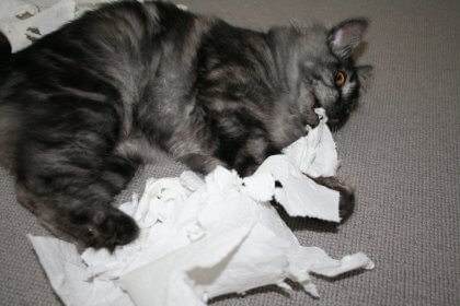 stressed out cat with toilet paper