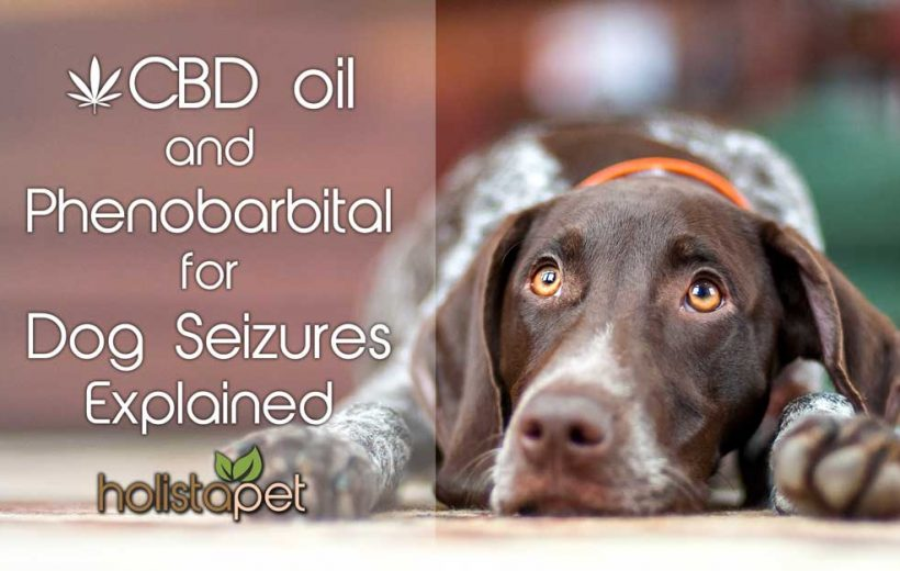 CBD Oil And Phenobarbital For Dog Seizures Explained