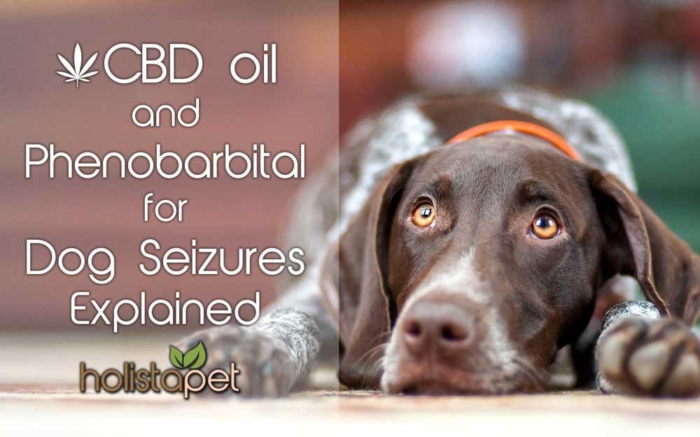 using CBD Oil and Phenobarbital for Dog Seizures