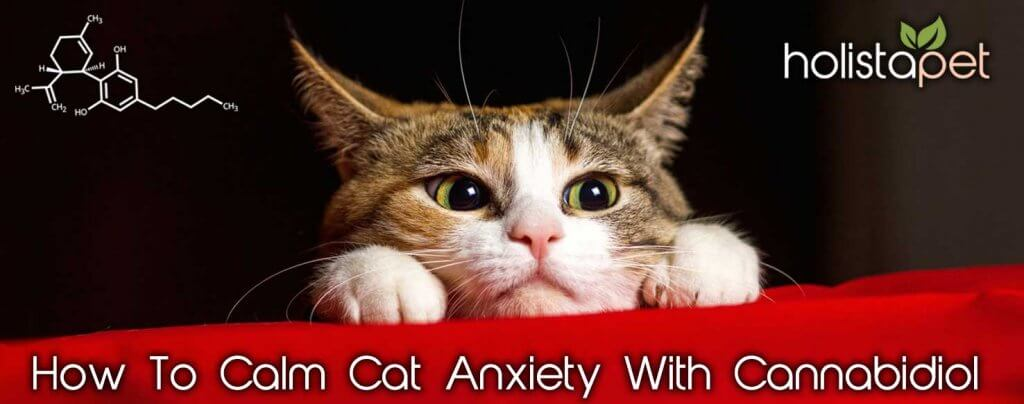 cannabidiol for cat anxiety