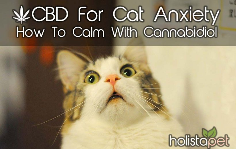 Cbd-for-cat-anxiety-how-to-calm-with-cannabidiol