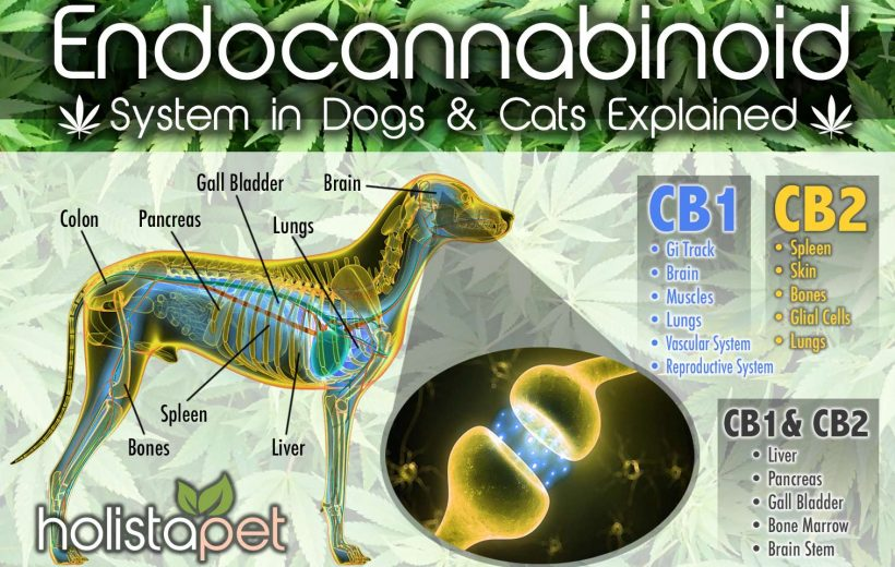 Dog CBD receptors HolistaPet