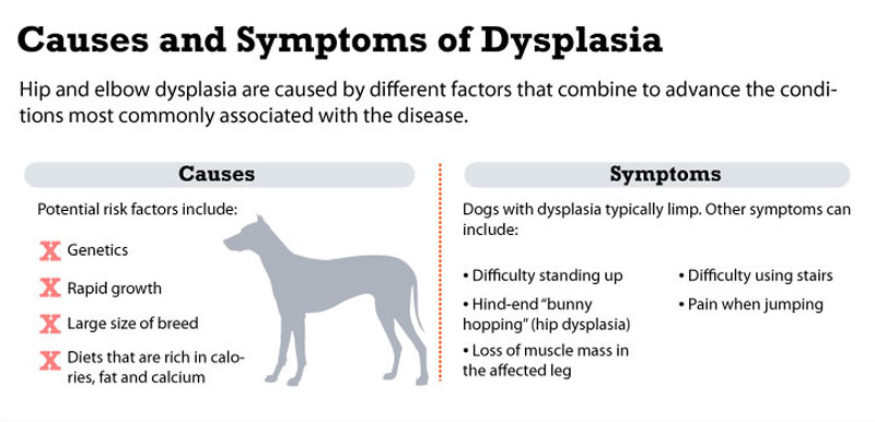 Using Cbd For Hip Dysplasia In Dogs The Truth Holistapet