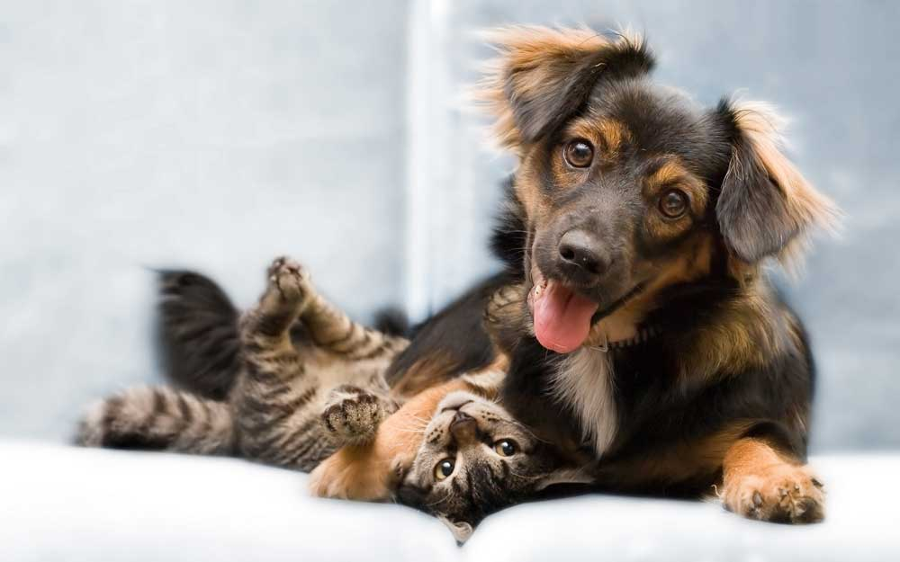 Potential Side Effects of CBD for Dogs and Cats [READ BEFORE USING]