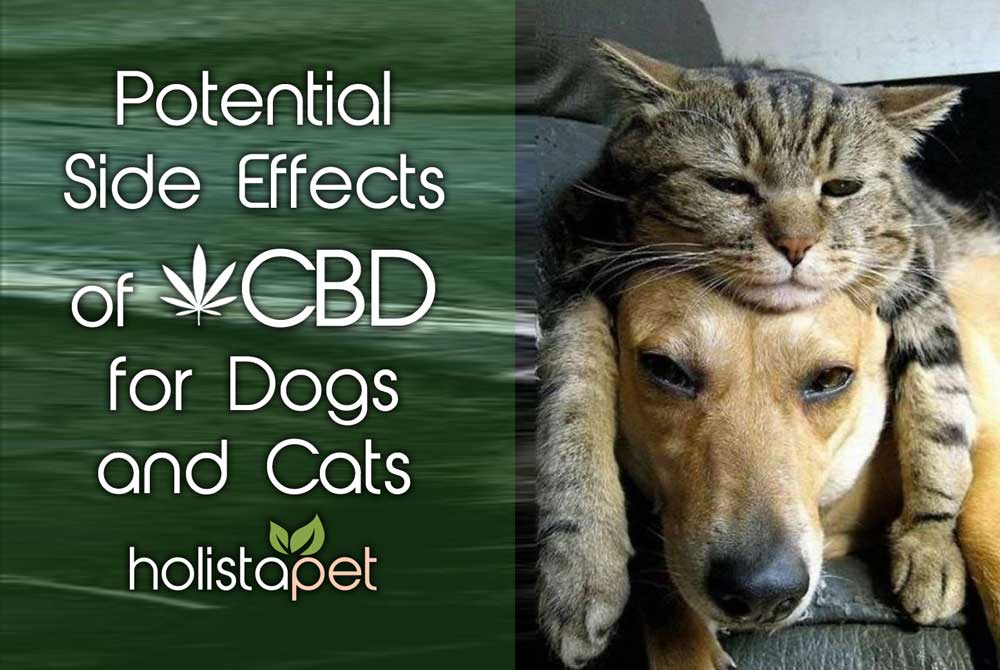 Potential Side Effects Of CBD for Dogs and Cats