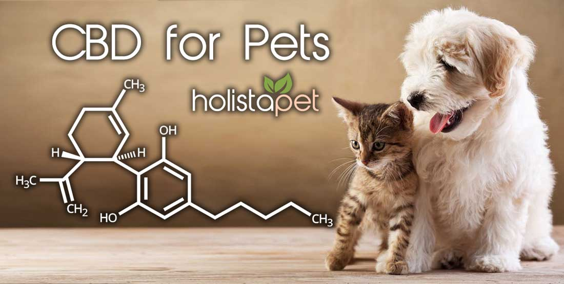 Potential Side Effects of CBD for Dogs and Cats [READ BEFORE
