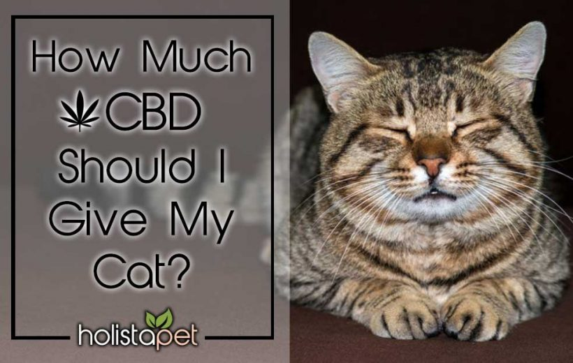 How-much-cbd-should-i-give-my-cat