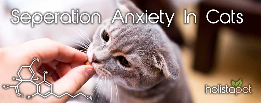 CBD for Separation Anxiety in Cats