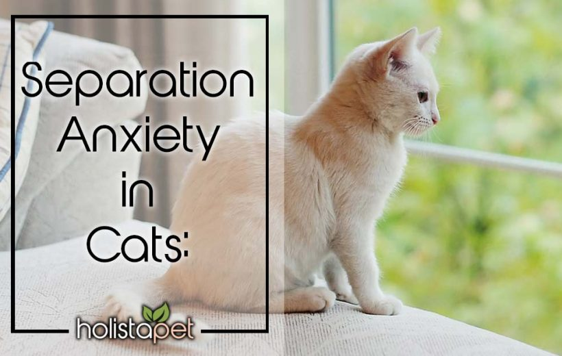 Separation Anxiety In Cats Cbd Stress Medicine