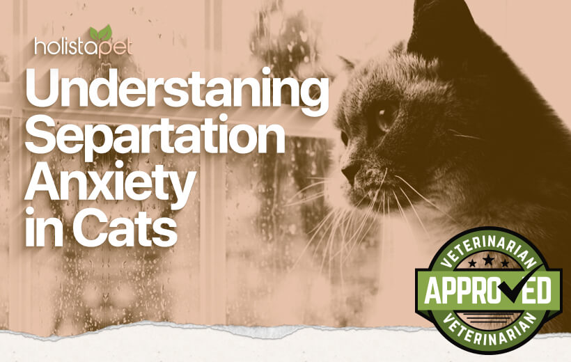 separation anxiety in cats
