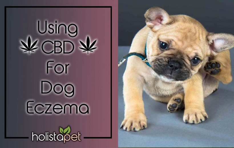 CBD For Dog Eczema [STOP THE ITCHING!]