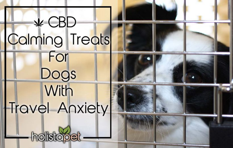 CBD Calming Treats For Dogs With Travel Anxiety
