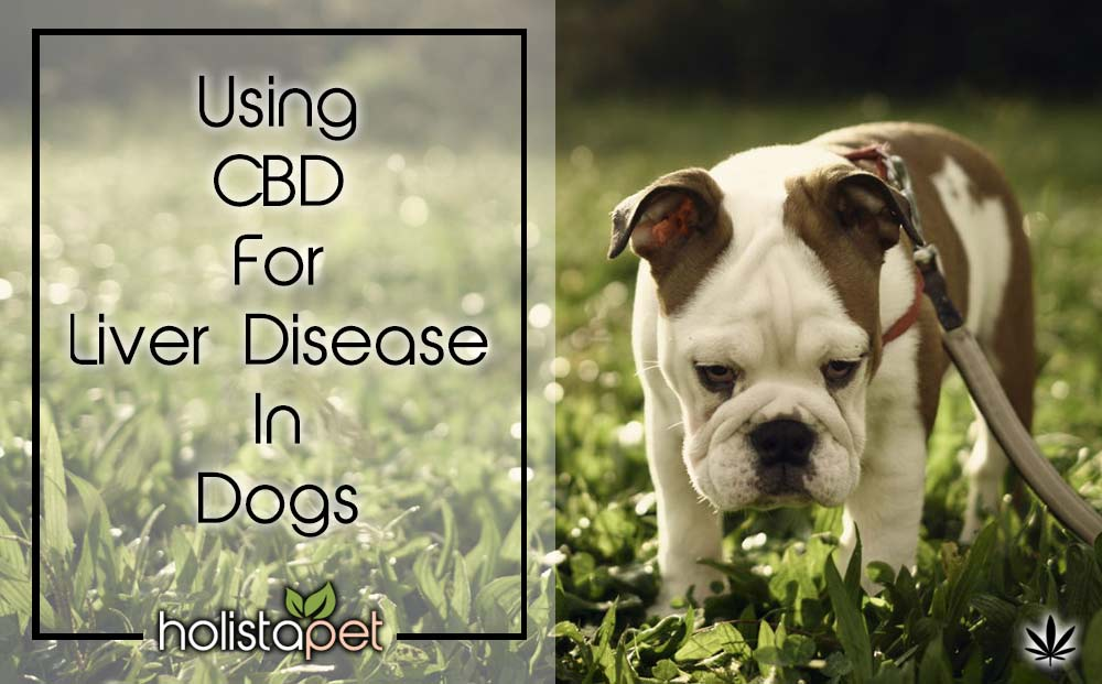 CBD for liver disease in dogs