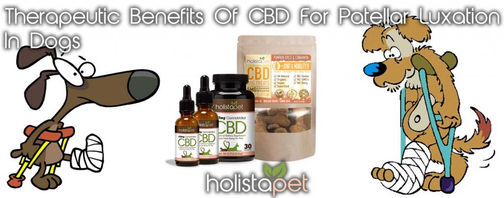 Therapeutic Benefits Of CBD For Patellar Luxation In Dogs Dogs In Crutches