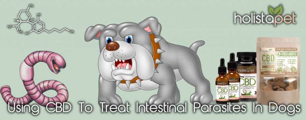 Using CBD To Treat Intestinal Parasites In Dogs Banner Dog And Worm