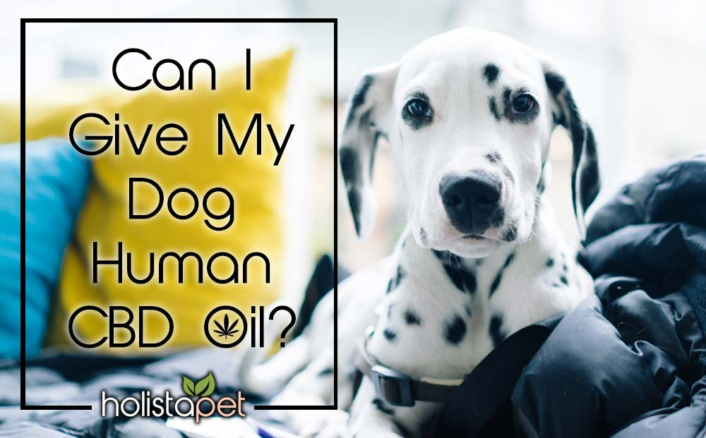 can-i-give-my-dog-human-CBD-oil-main-image