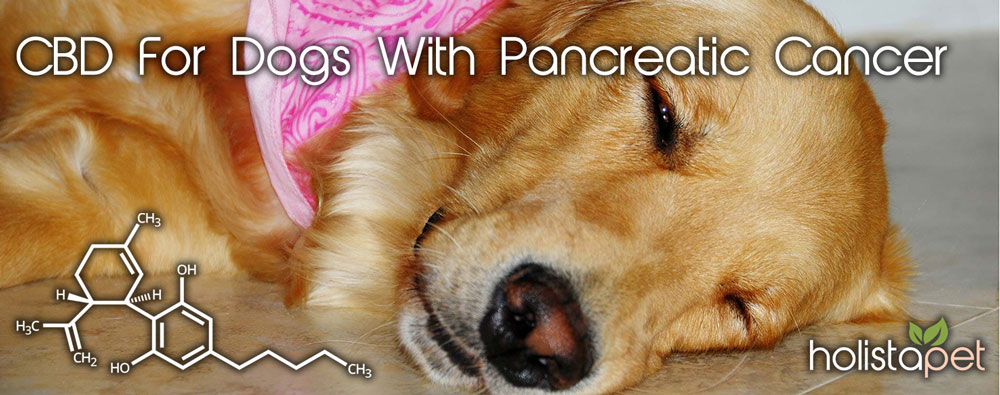 cbd-for-dogs-with-pancreatic-cancer-2