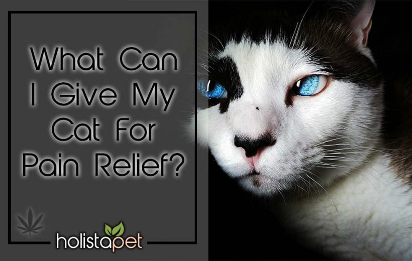 What-can-I-give-my-cat-for-pain-relief