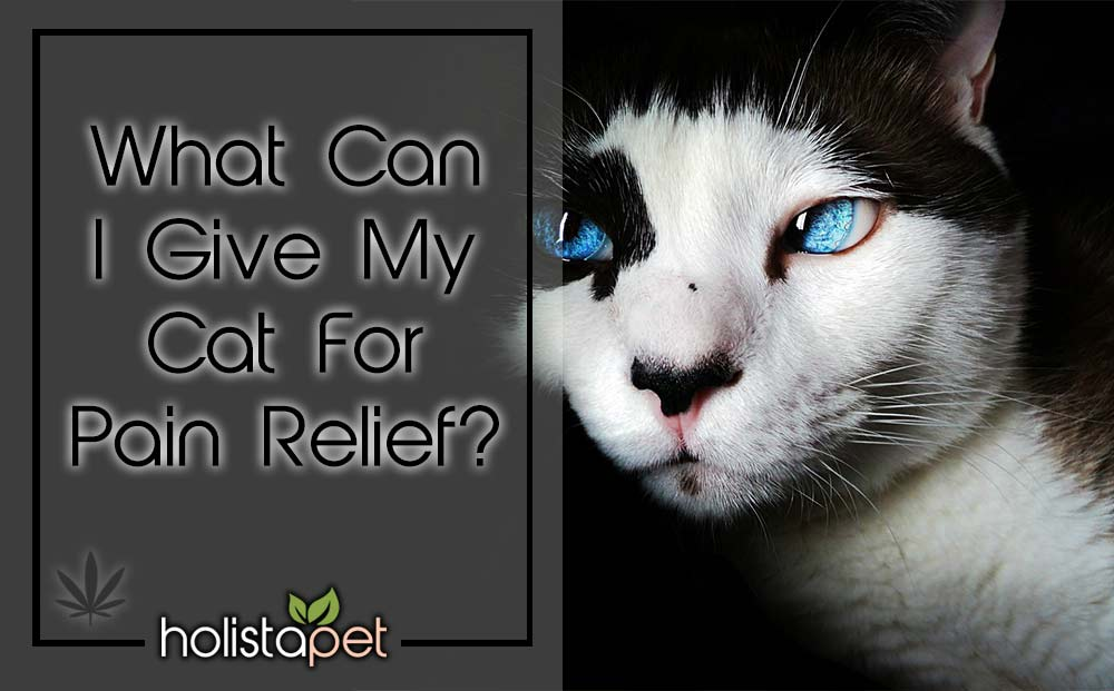 what can I give my cat for pain relief featured blog image