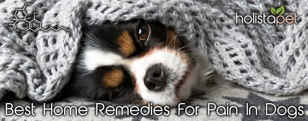 Best Home Remedies For Pain In Dogs Banner
