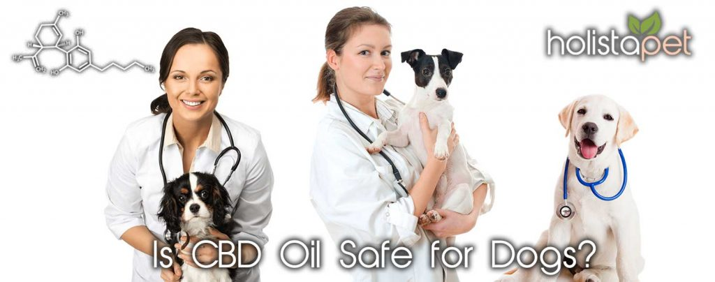 Is CBD Safe For Dogs Banner Vets & Dogs