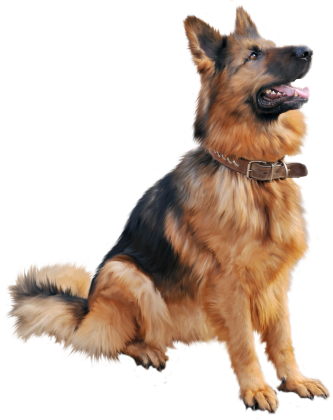 k9 png