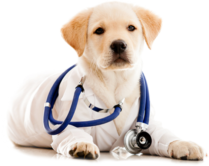 doggy doctor