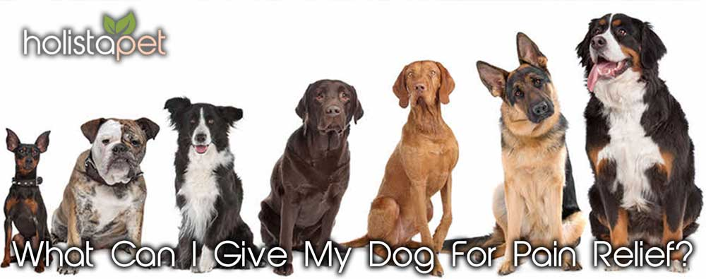 what can I give my dog for pain relief banner