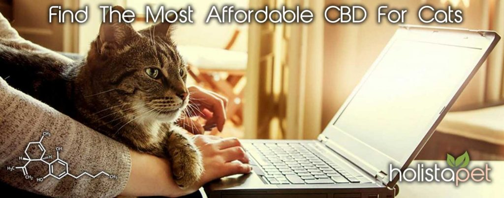 CBD For Cats Search Banner