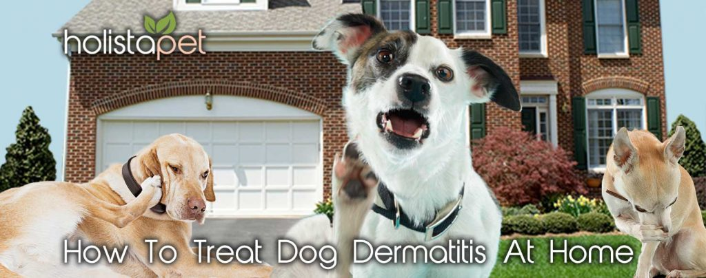 how to use cbd oil to treat dog dermatitis at home banner