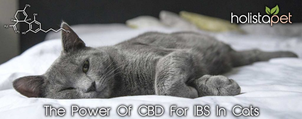 The Power Of CBD For IBS In Cats