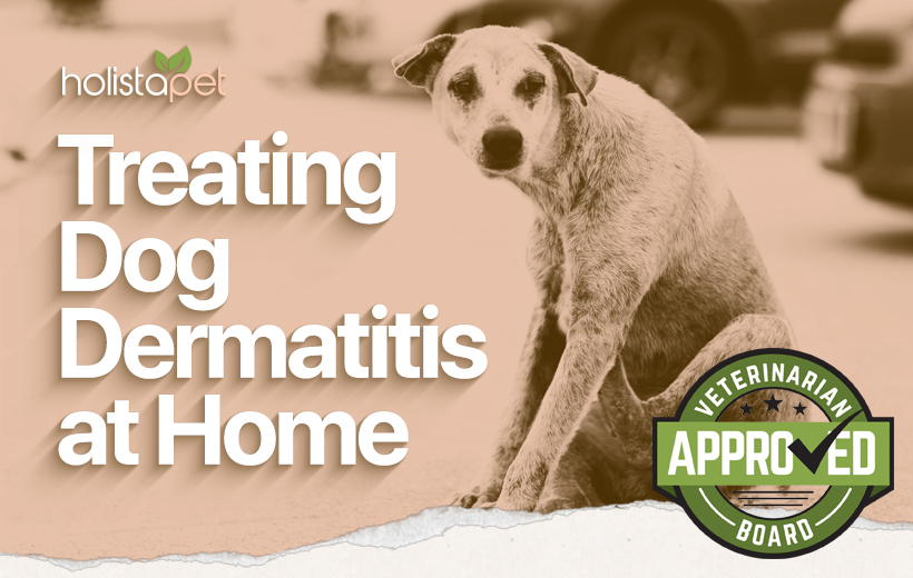 dog dermatitis home treatment