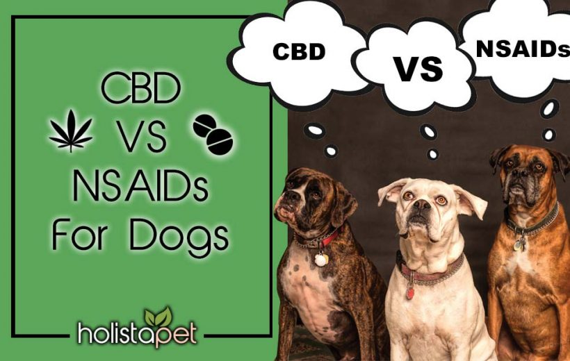 CBD VS. NSAIDs For Dogs