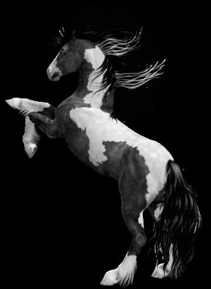 CBD horse