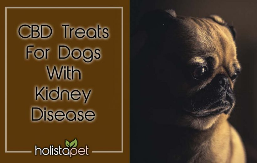 CBD Treats For Dogs With Kidney Disease Holistapet